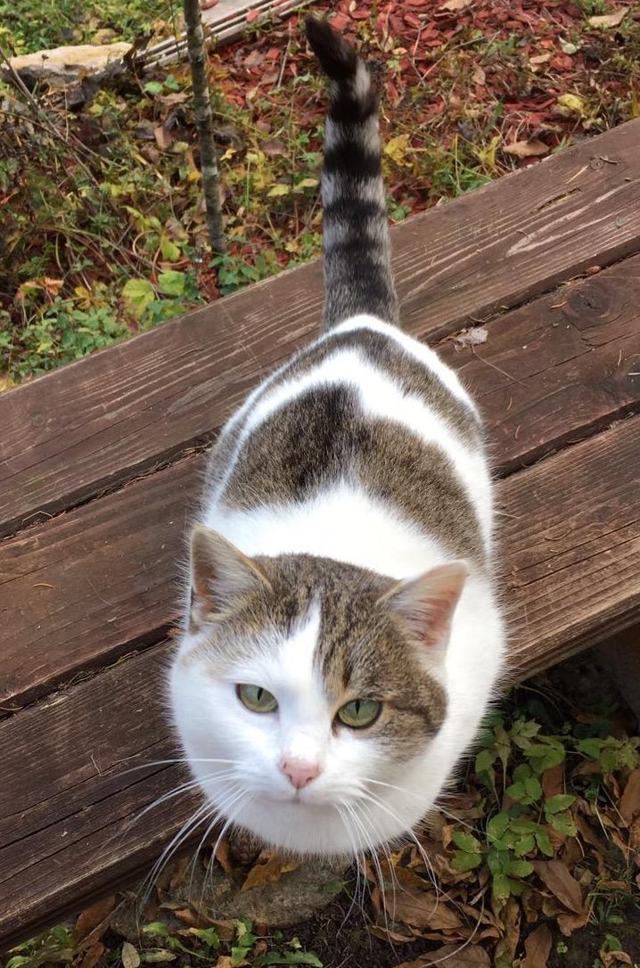 Klare Kommunikation zwischen Katze und Besitzer