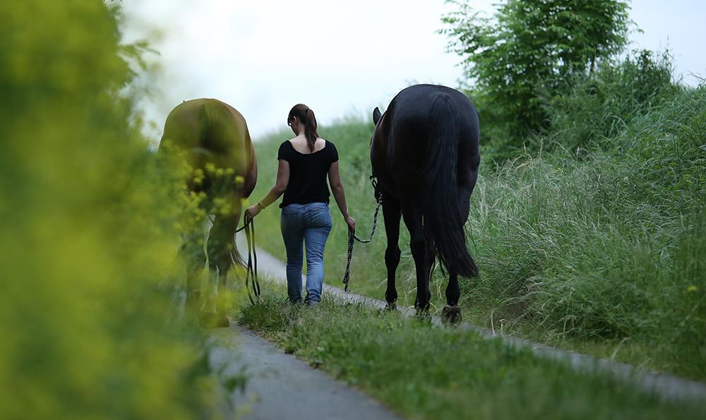Frau läuft mit zwei Pferden einen Grasweg entlang im Sommer